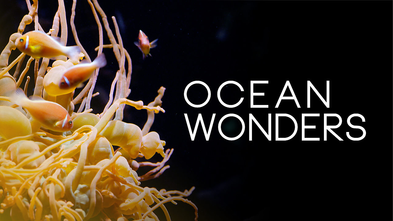 Image result for ocean wonders netflix